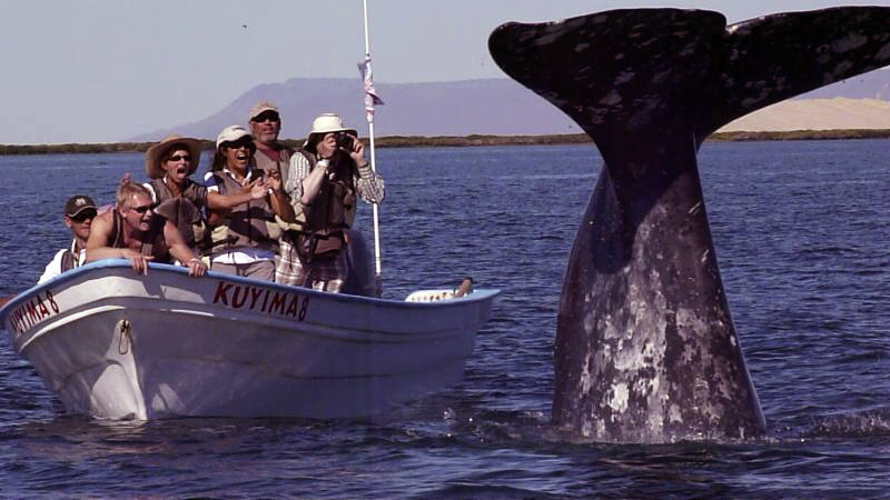 Boatful-of-people-and-Gray-Whale-C
