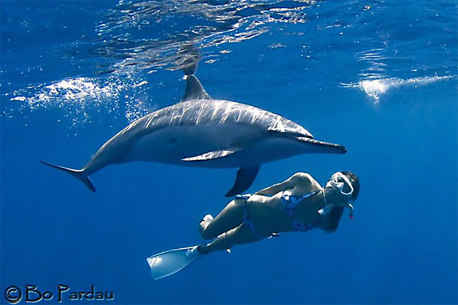 Hawaii-Dolphin-Swim-C