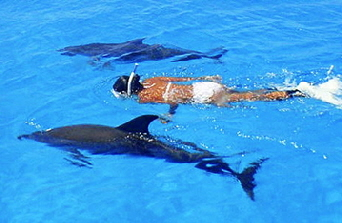 Swimming-with-Wild-Dolphins-in-Bimini-SM-C