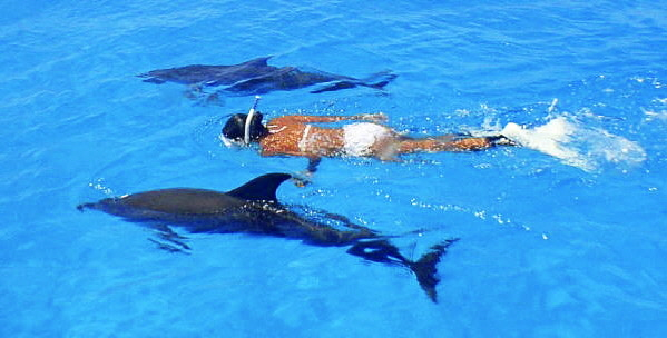 Swimming with Wild Dolphins in Bimini